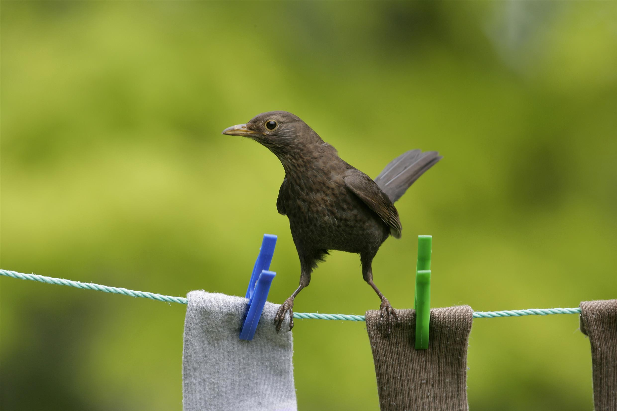 A bird perching on a washing line