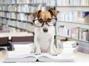 Cute dog with school books