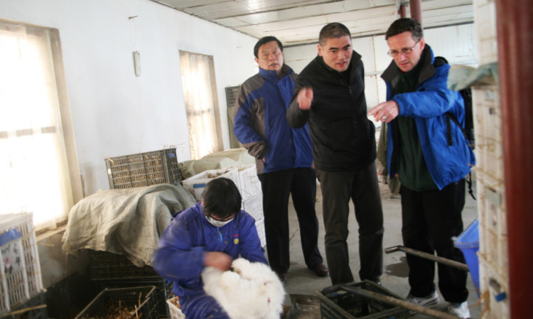 William Sichel (right) investigates rabbit farms in China