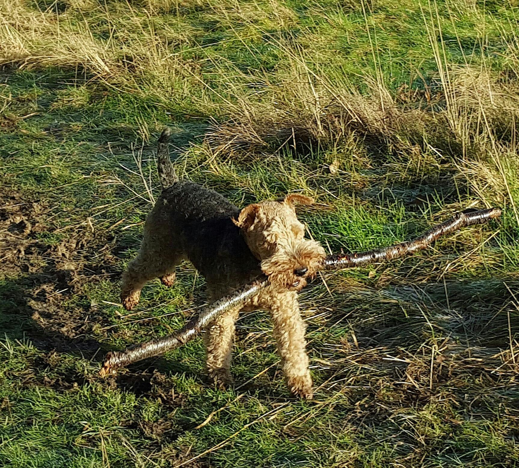 Throwing sticks for dogs warning
