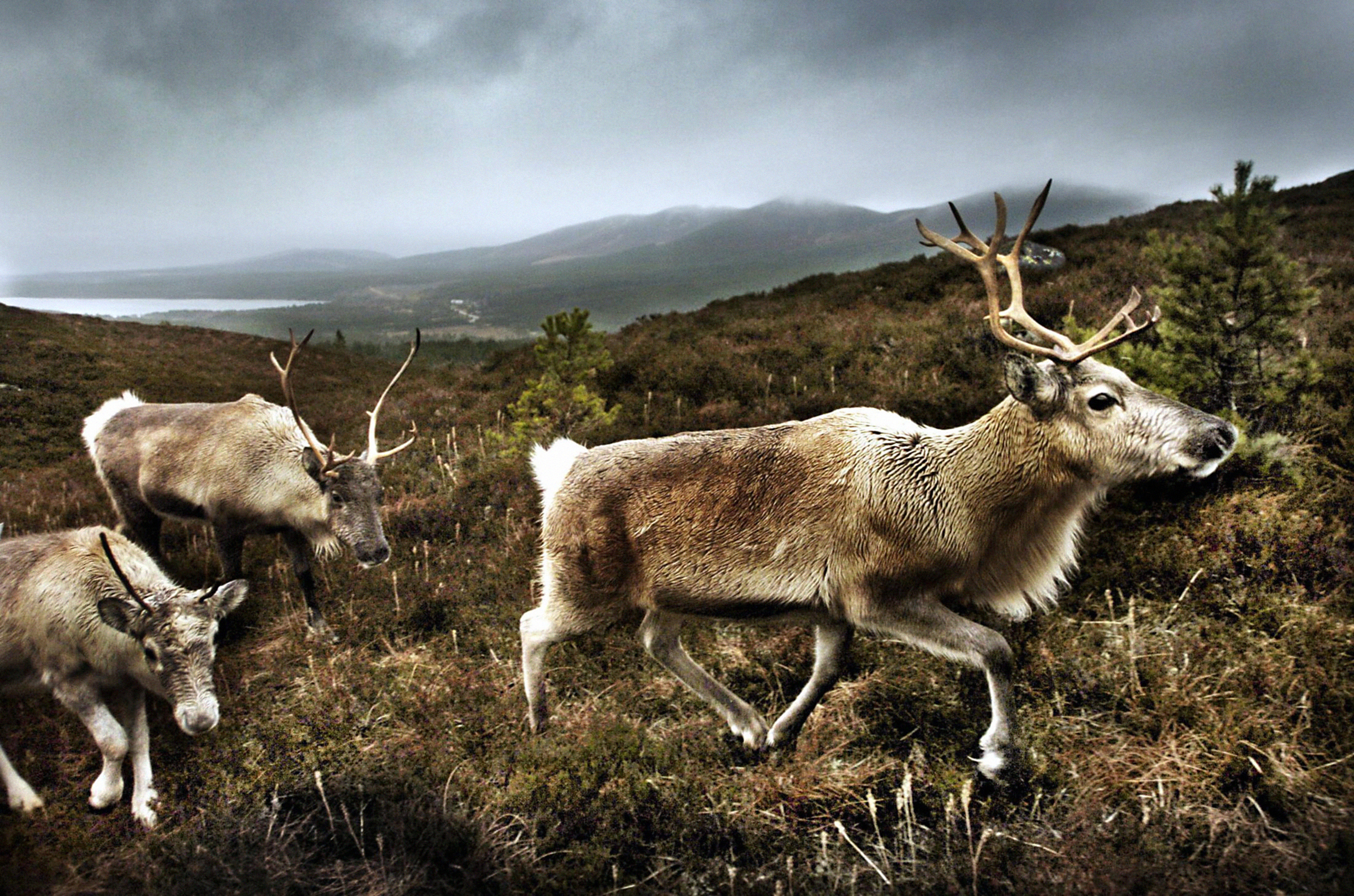 The Cairngorm Reindeer Centre (PA Archive)