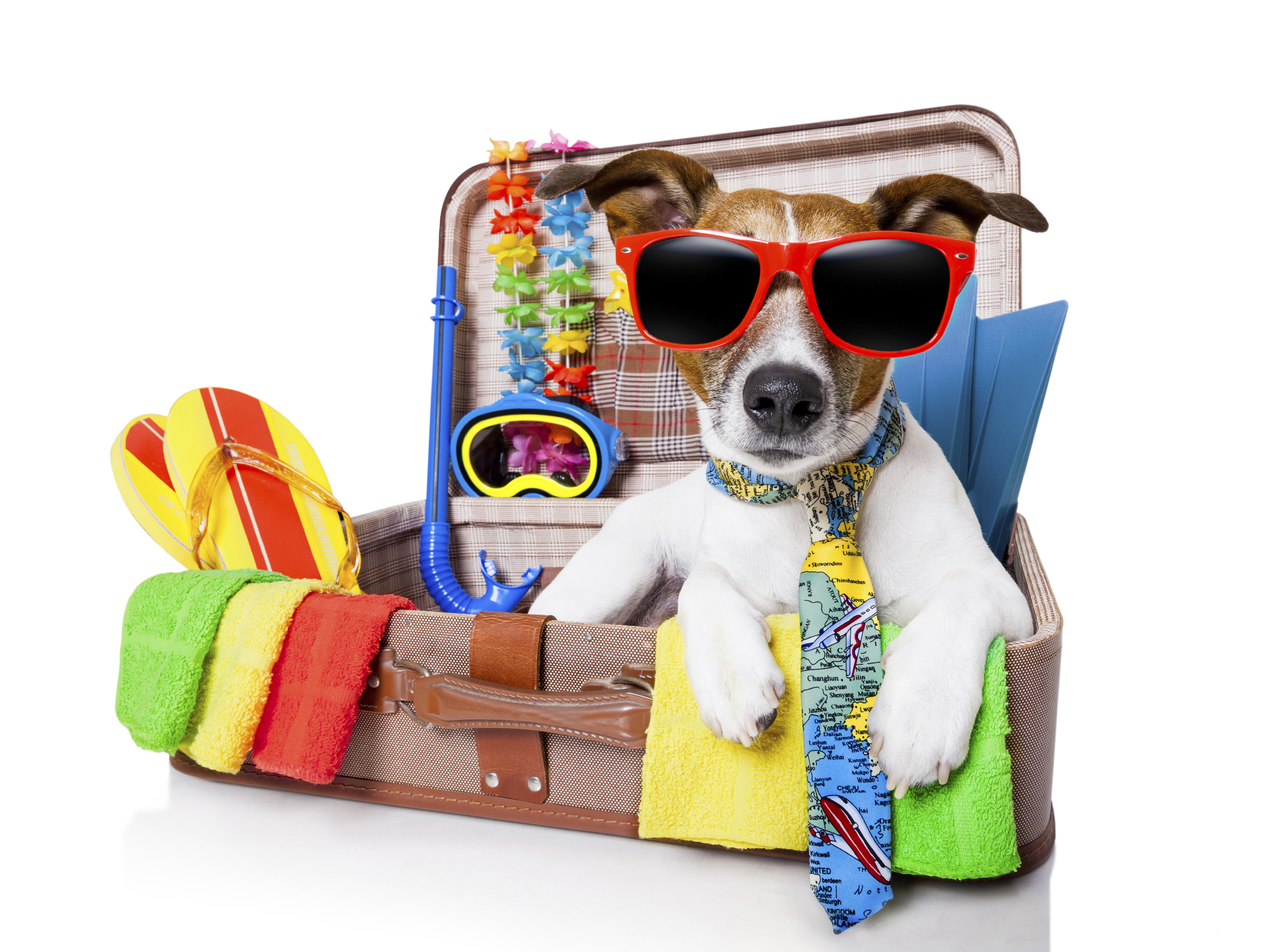 Does your dog need a holiday?