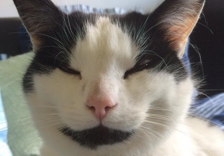 Roddy the cat