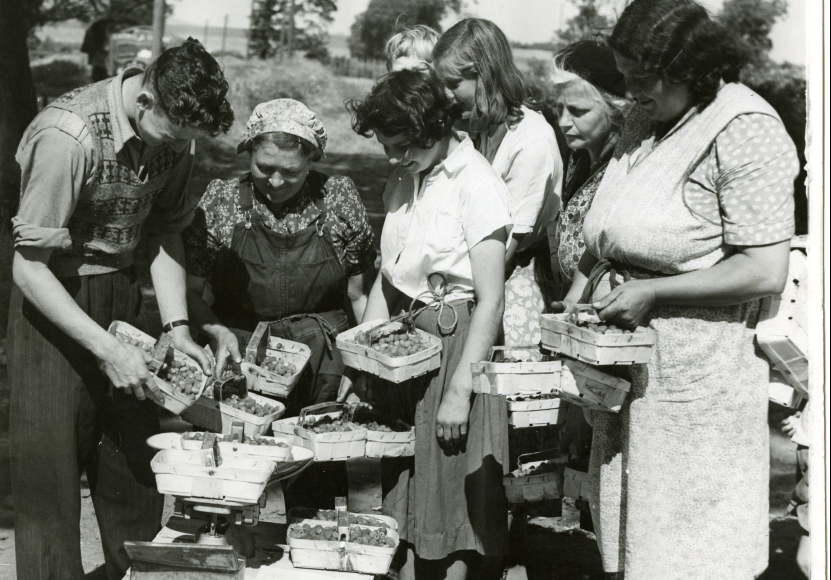 Berry pickers weigh in at Glendoick (DC Thomson)