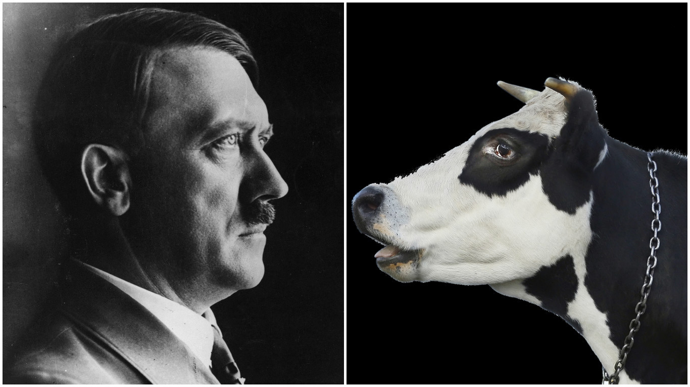 The Nazis bred 'supercows'