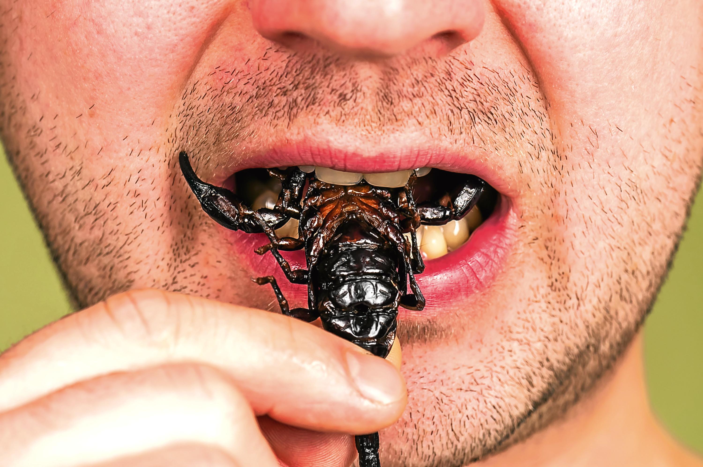 man (gourmet) eats a roasted black scorpion