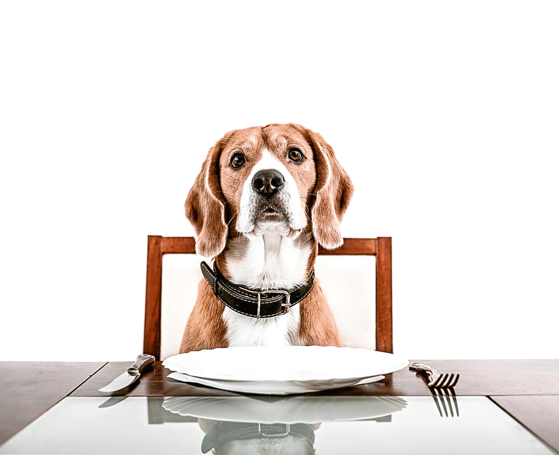 Dogs in restaurants: Can you take your pet out for dinner