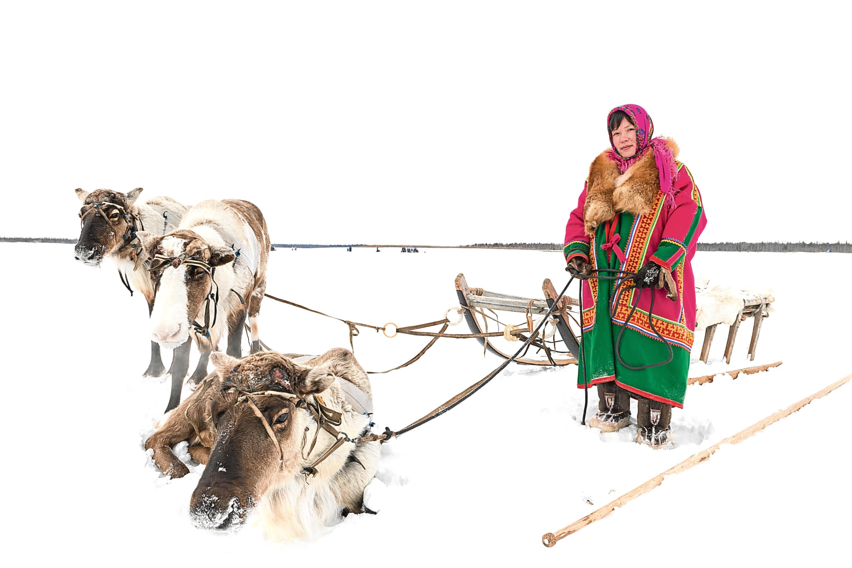 Woman with reindeer team on the Yamal Peninsula
