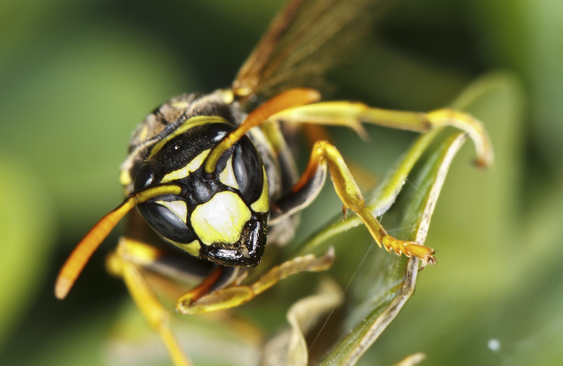 Wasps are a big pest during summer months (Getty Images)
