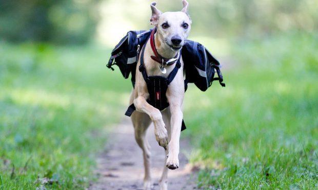 Sally Easton's dog Zebedee (Andrew Cawley/DC Thomson)