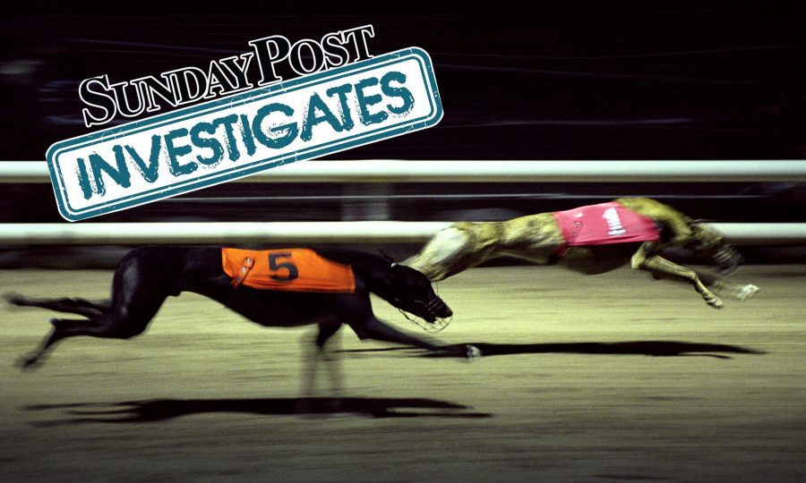 Greyhounds race during a night race at Owlerton Greyhound Stadium and Dog Track, Sheffield, South Yorkshire, UK.