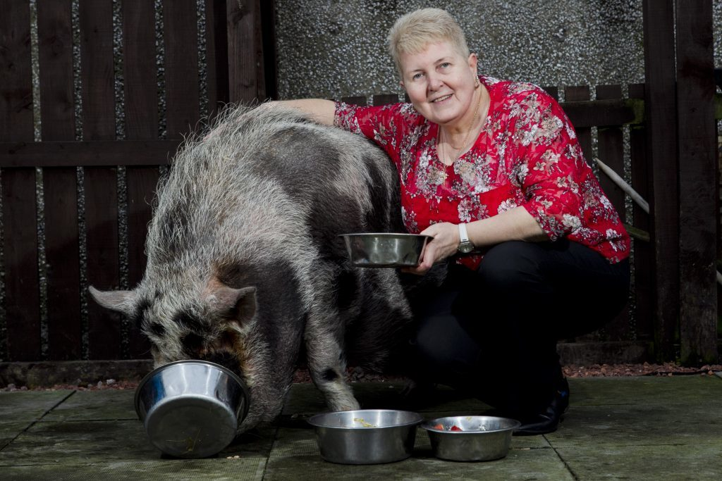 Dudley the pig and owner Catherine Dawes (Andrew Cawley / DC Thomson)
