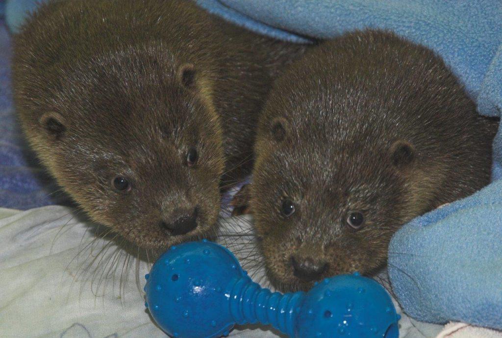 Otters