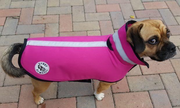 Doggy armour