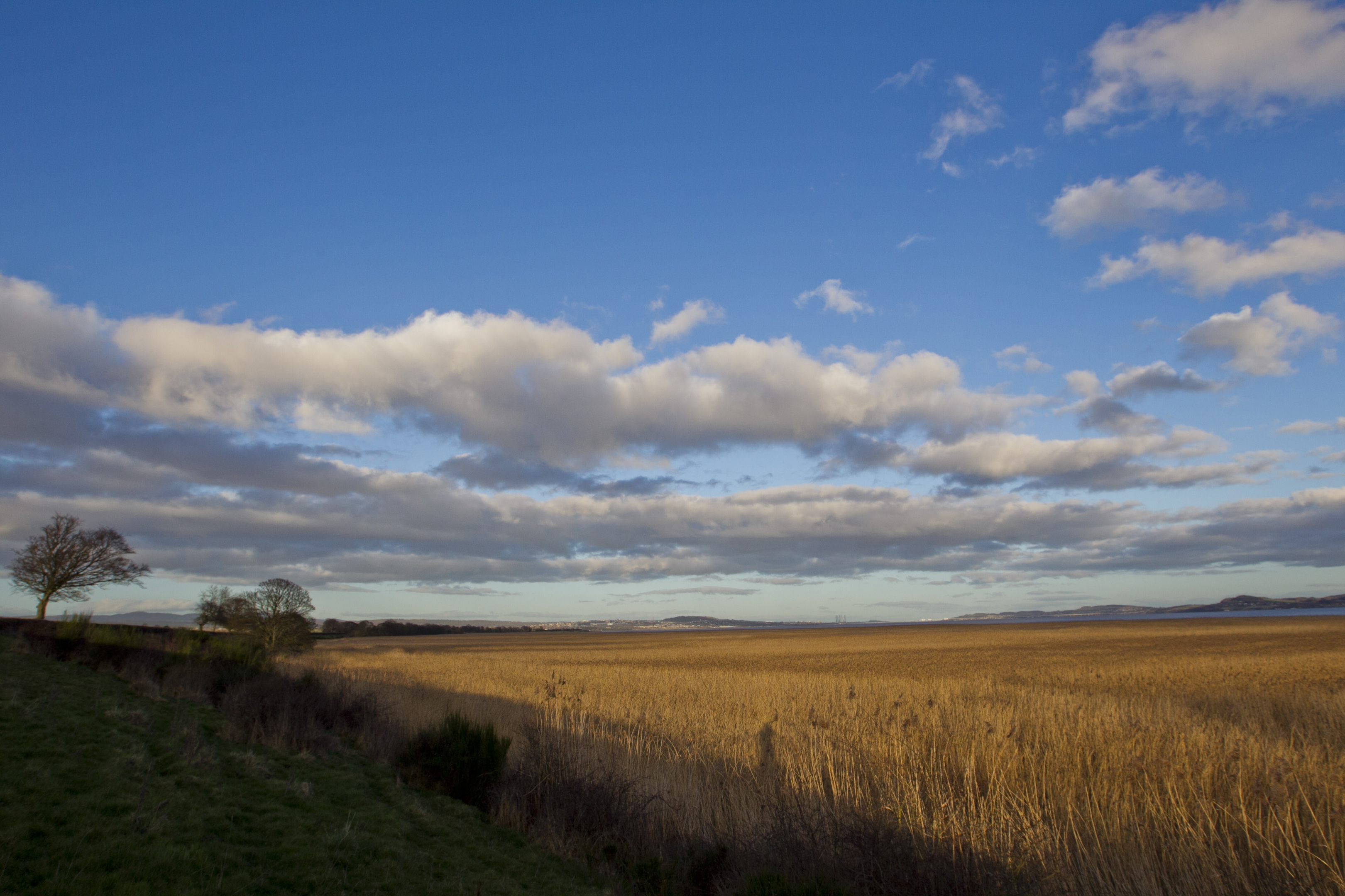 Reed beds on the shore of the River Tay, near Longforgan, looking towards Dundee (Andrew Cawley)