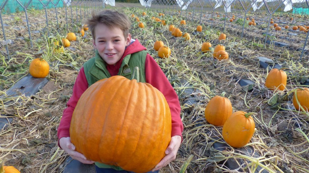 Rowan Laird age 14, at the farm