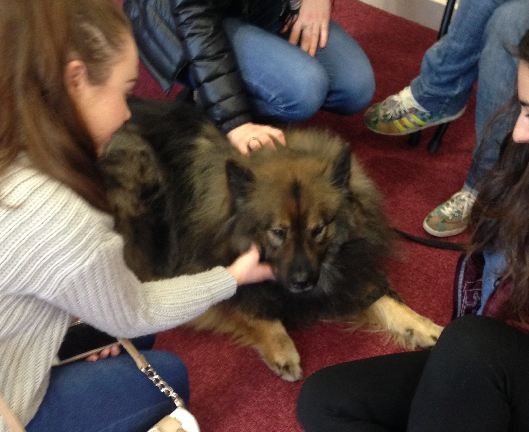 Lupo the Eurasier got a lot of attention from the students