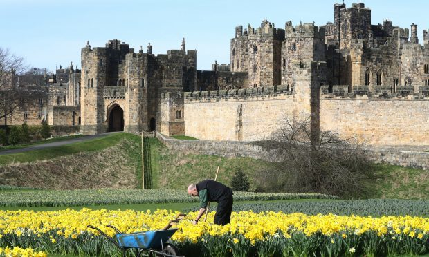 Head gardener for Alnwick Gardens Trevor Jones tends to the daffodils (Owen Humphreys/PA Wire)