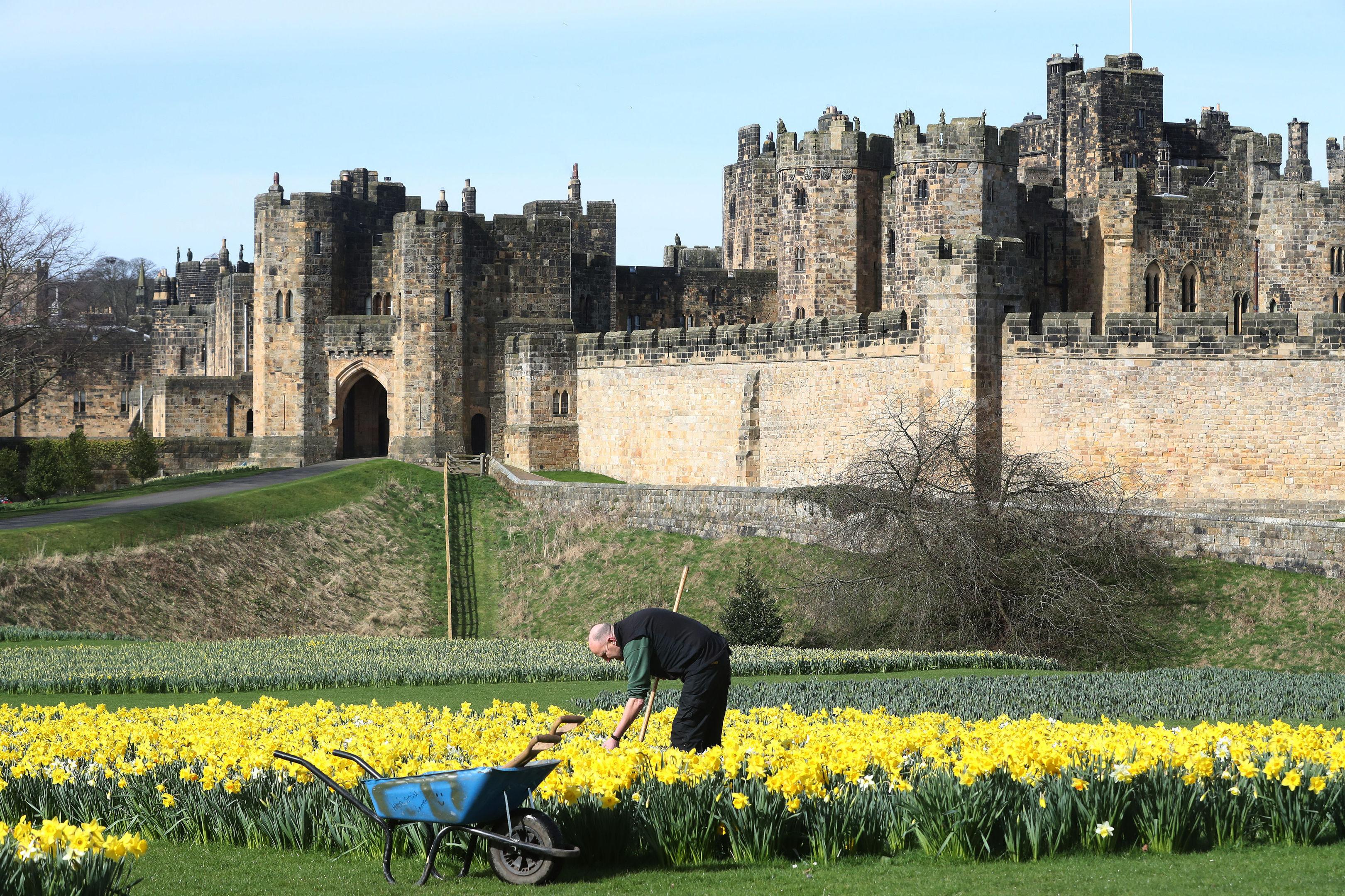 Head gardener for Alnwick Gardens Trevor Jones tends to the daffodils (Owen Humphreys/PA Wire)