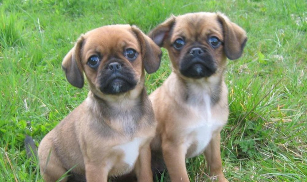Puppies are being trafficked and brought over to Scotland illegally.