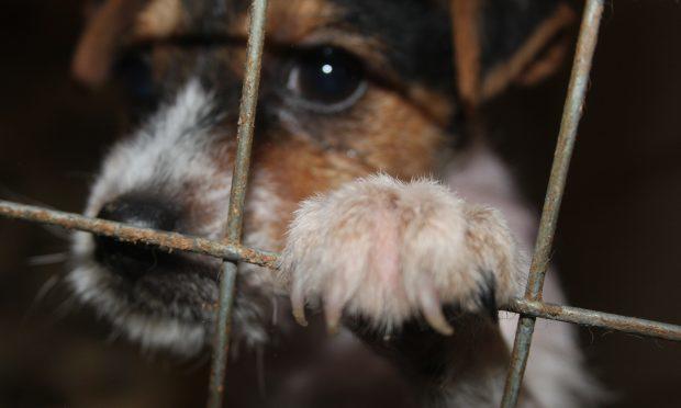 Puppy farm (SSPCA)