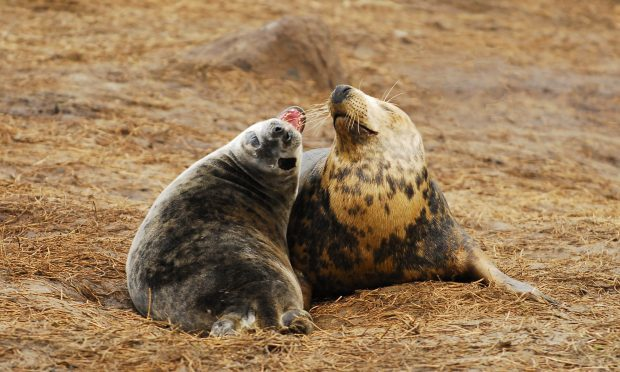 The animals become close and friendly after receiving injections of the hormone oxytocin, scientists have found (KJ Robinson/PA Wire)