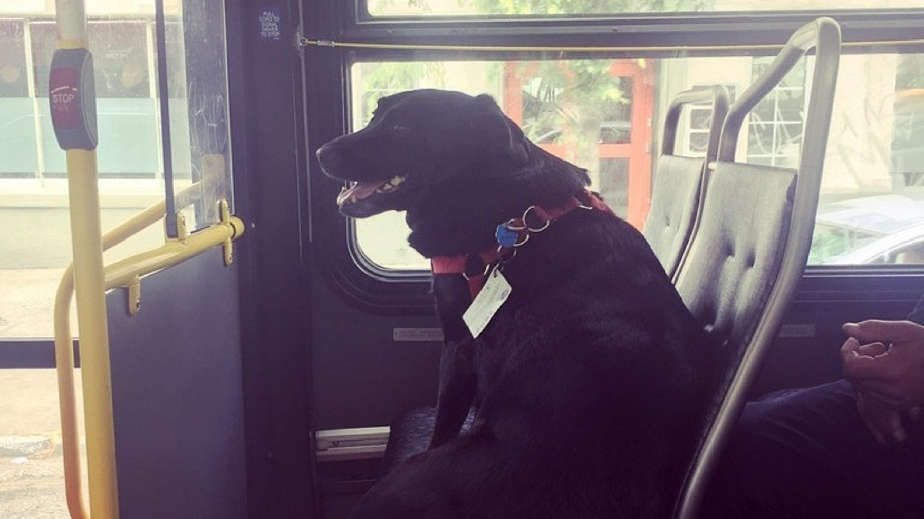 Eclipse the dog sits on a bus