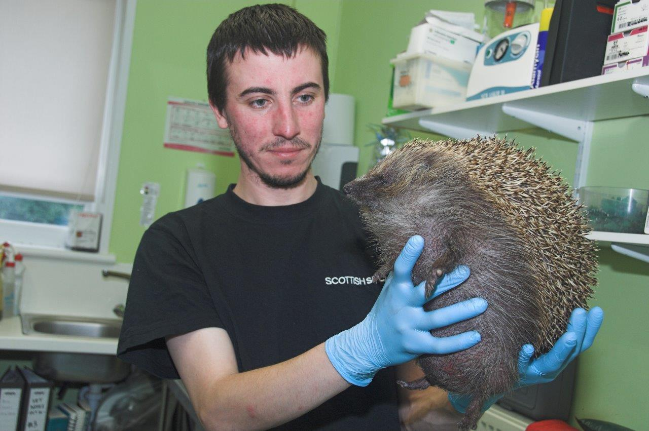 Zepplin the hedgehog with Stuart Loch (Colin Sneddon)