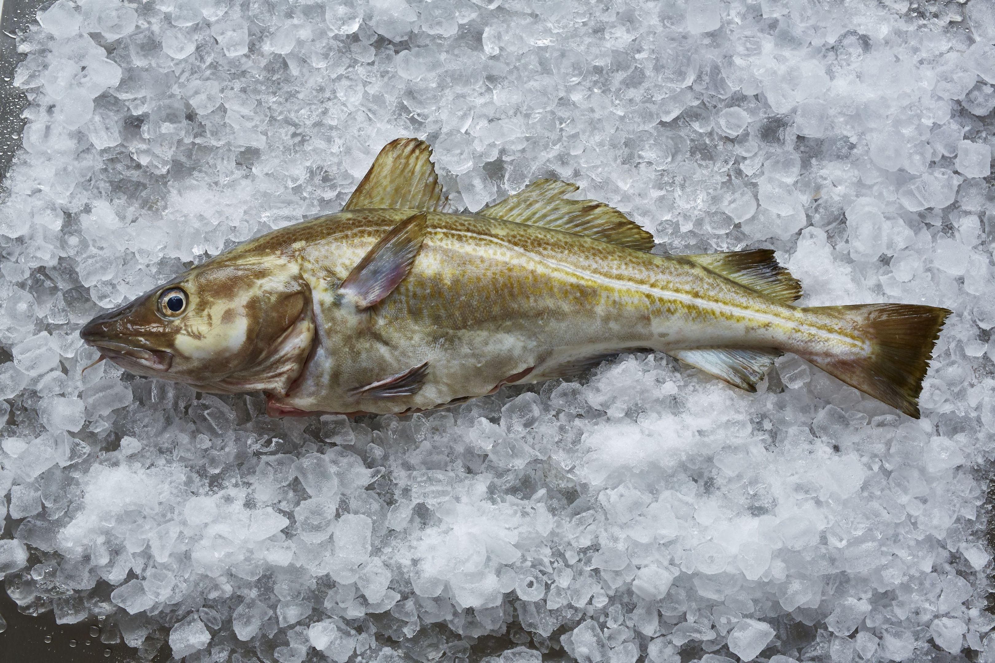 North Sea cod.