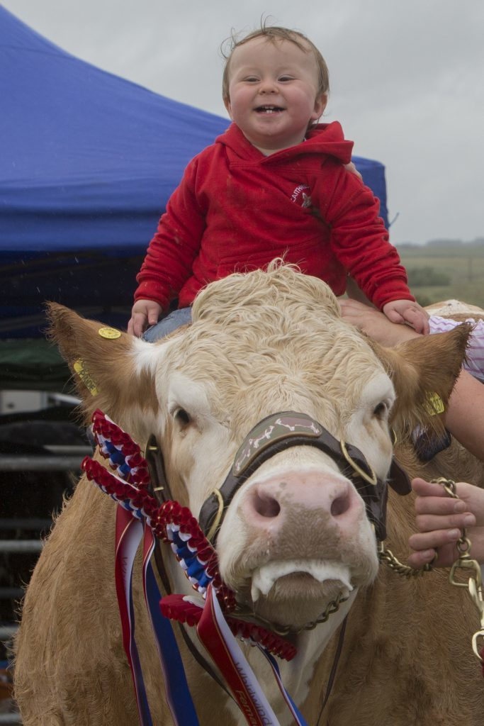 One year old Jenson Gunn, Mavsie, Lybster, the youngest member of the British Simmental Cattle Society, with his heifer, Mavsey Golden Pride, that won the champion of champions award at both Caithness County and Latheron shows. (Robert MacDonald / Northern Studios)