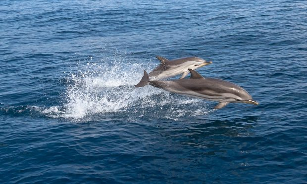 Navies around the world use dolphins in missions (Getty Images)