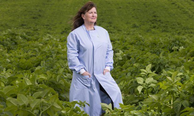 Forensics Officer Lorna Dawson at Knockquarn Farm potato field (Ross Johnston/Newsline Media)