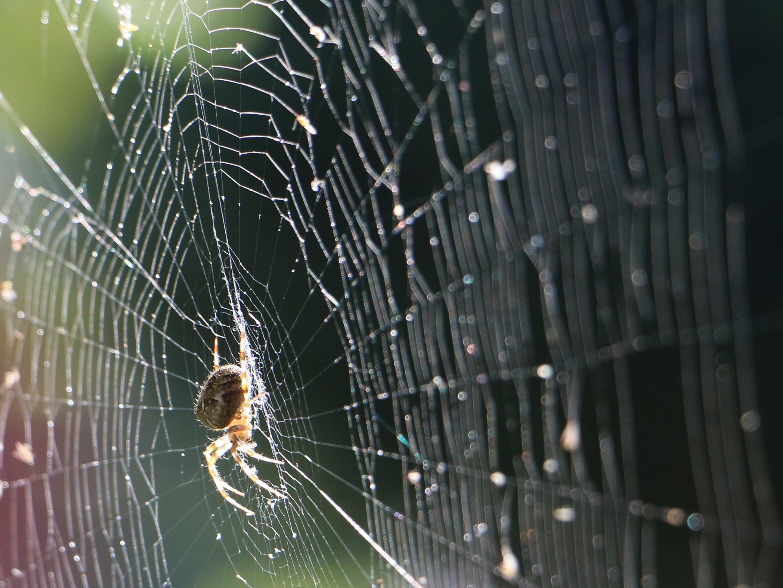 Spider season is upon us (iStock)