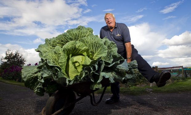 Bryan Calder with his giant cabbage (Andrew Cawley / DC Thomson)