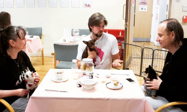 Edinburgh Chihuahua Cafe is opening soon... And it's looking for staff! (Edinburgh Chihuahua Cafe)