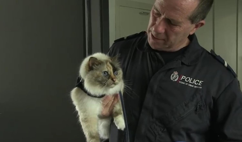 Police cat Tia