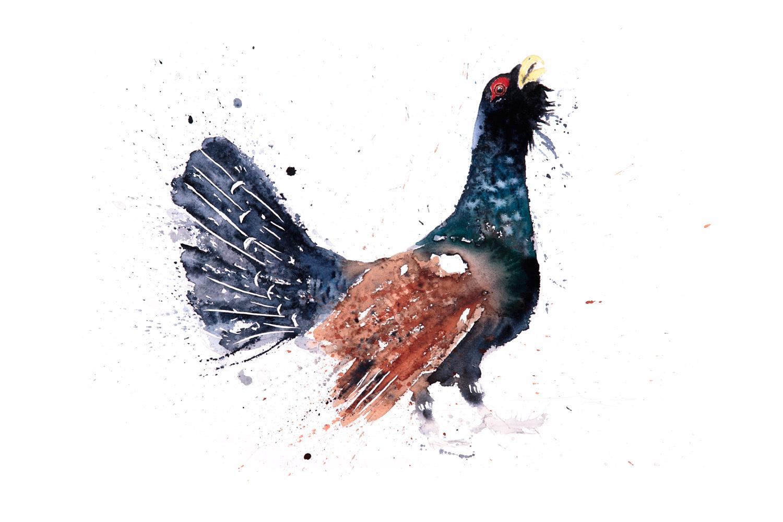 Capercaillie By Syman Kaye. (symankaye.com)