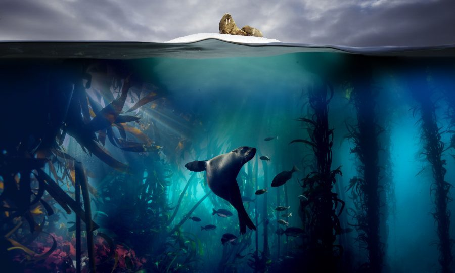 Blue Planet II (BBC/Lisa Labinjoh/Joe Platko)