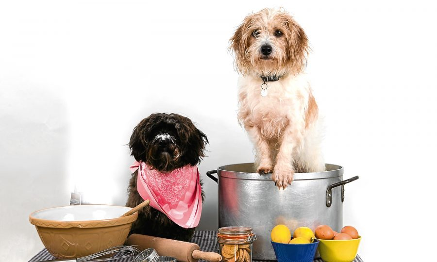 "The ""Hairy Bakers"", dogs Tilly and Mungo, who have written a cook book for dog snacks. (Andrew Cawley)"