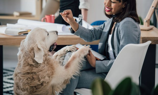 Some office workers say having pets in the workplace can be a distraction (iStock)