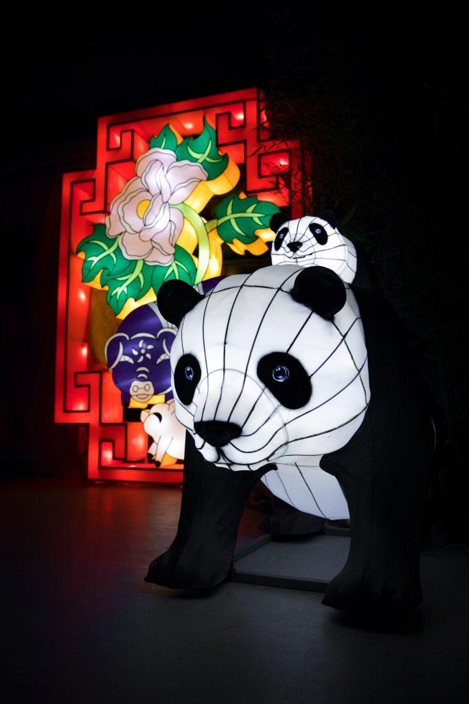 Giant Panda Lanterns (RZSS Media)