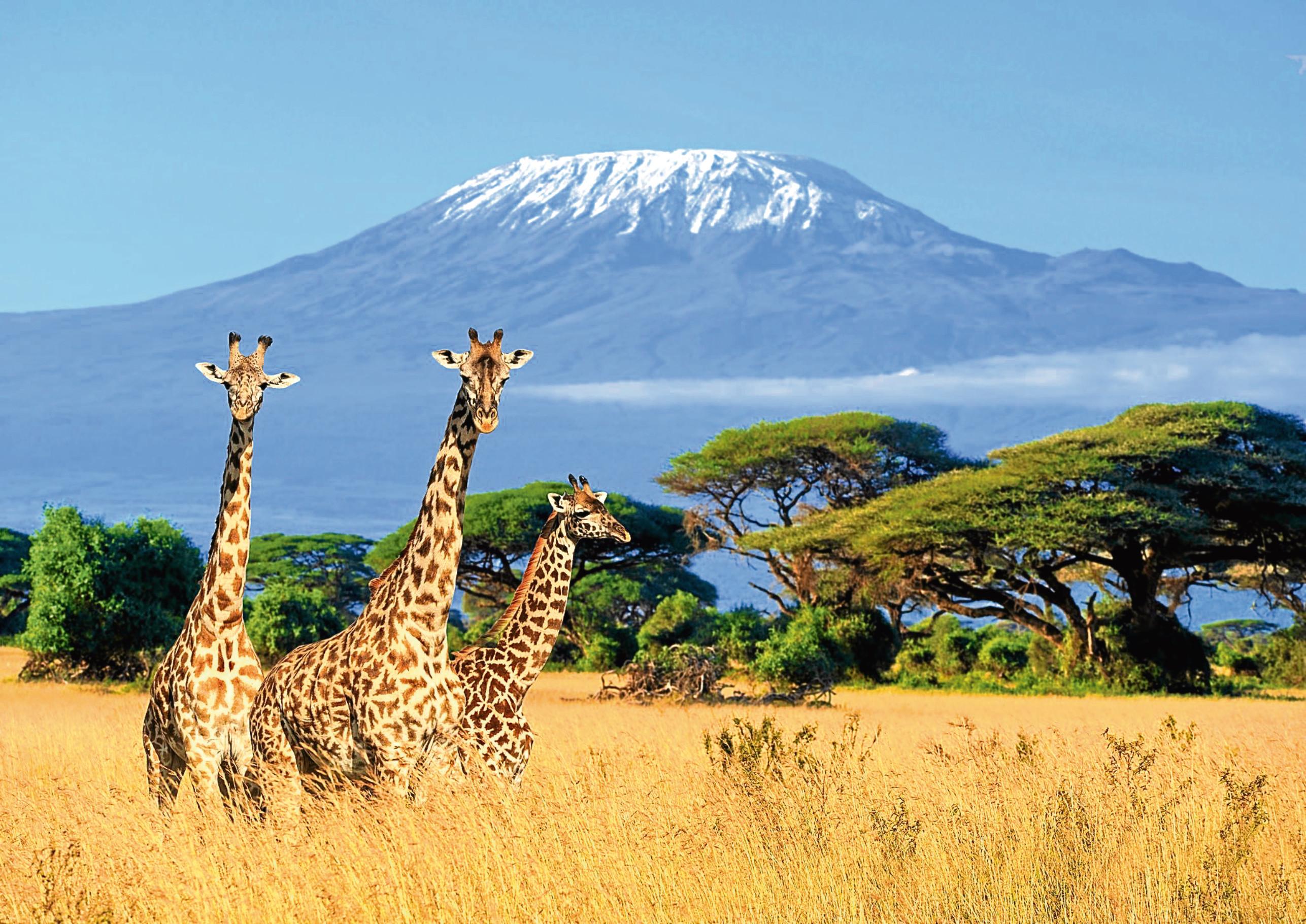 Kenya (iStock)