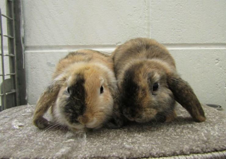 Brandie and Tabitha (Scottish SPCA)