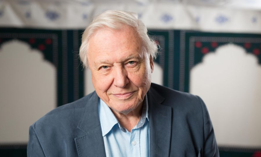 David Attenborough slams Bear Grylls over killing of animals for TV entertainment