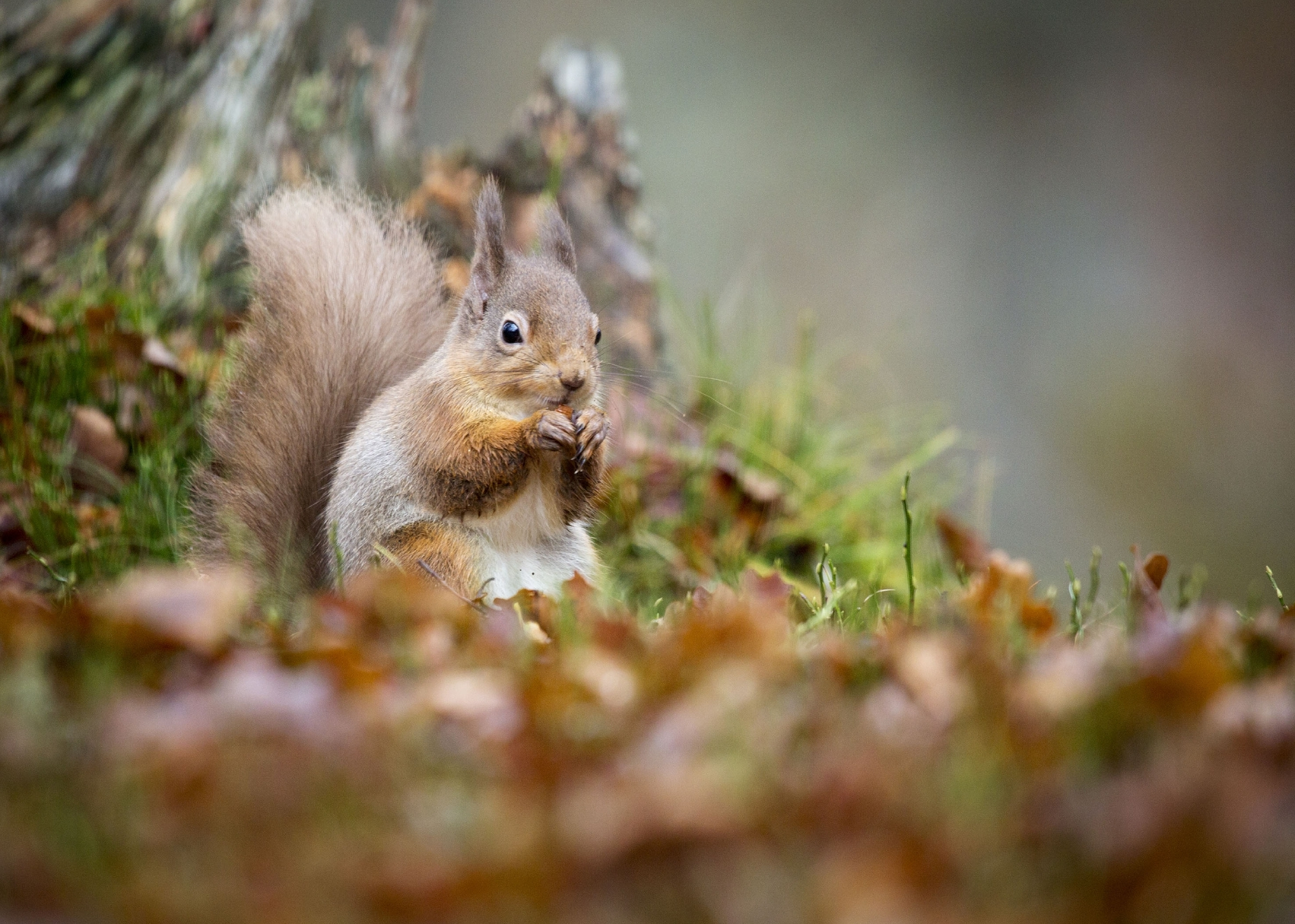 The new project aims to protect Scotland's natural environment and wildlife.