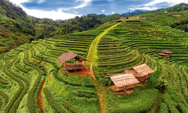Tea plantation terrace in Chiang Mai, Thailand (Getty Images)