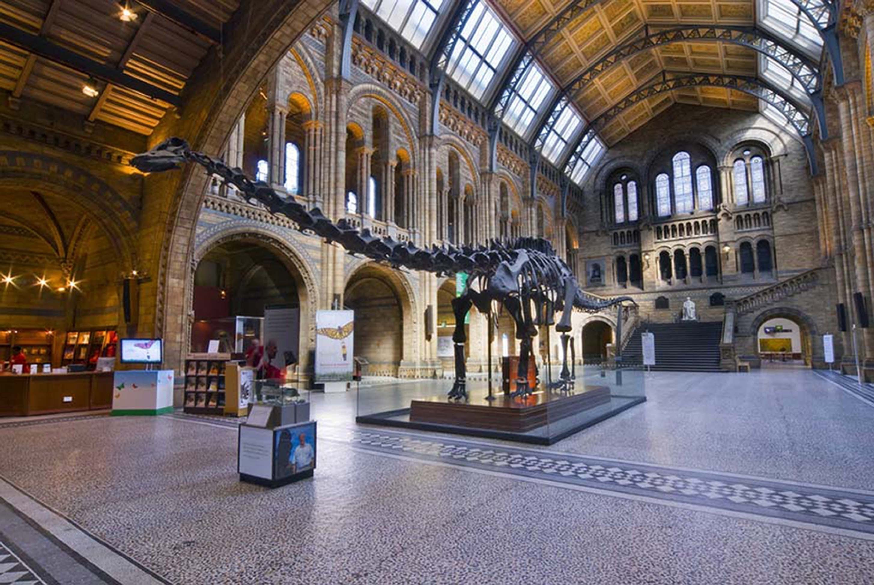 Dippy the Diplodocus (Natural History Museum/PA Wire)