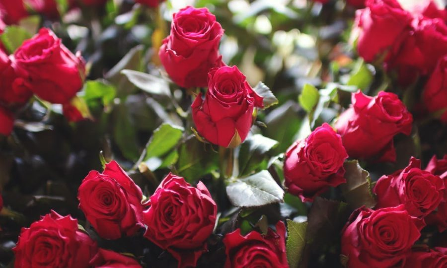 Rural Romantics Face Rip Off Delivery Charges For Valentine S Day