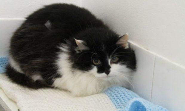 Dasher (Scottish SPCA)