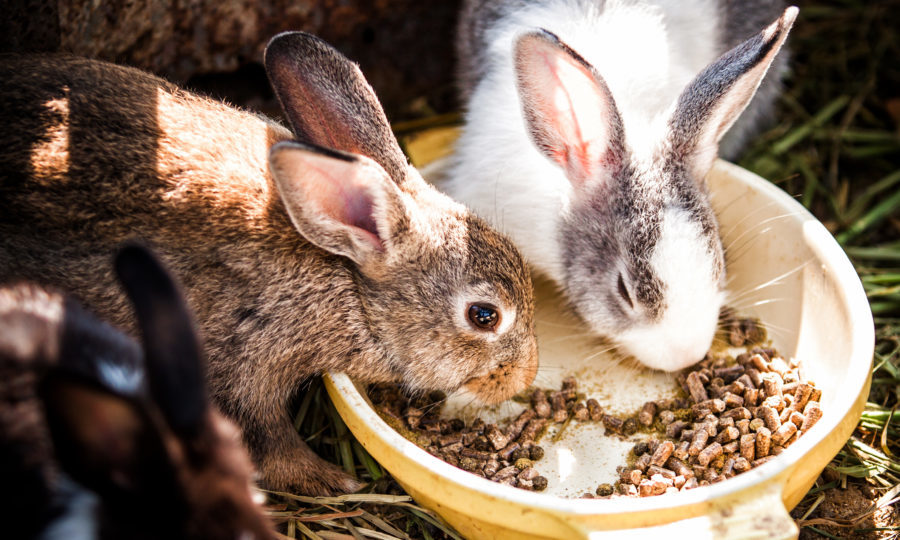 A rabbit is for life not just for easter scottish spca advise the scottish spca are advising against buying rabbits as easter gifts getty images negle Choice Image